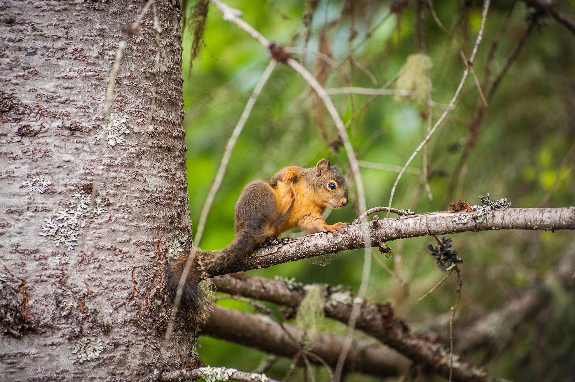 MBP_Wildlife_17.jpg