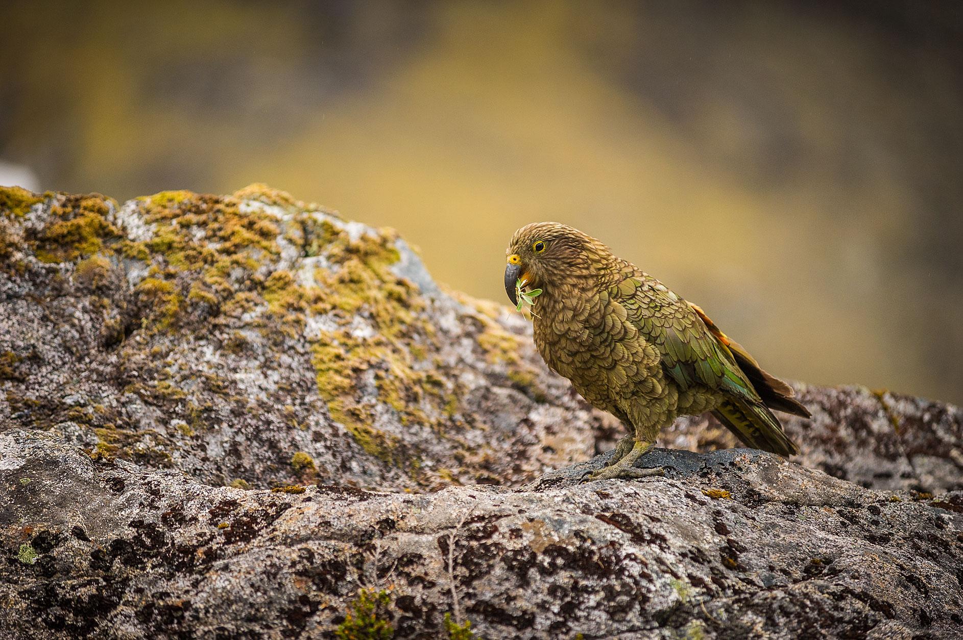 MBP_Wildlife_22.jpg