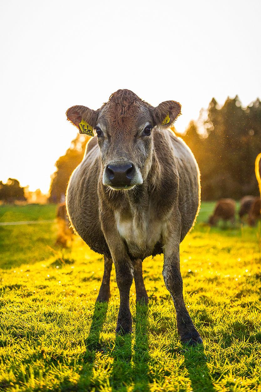 MBP_Farmlands_4.jpg