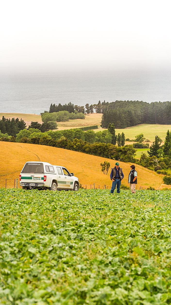 MBP_Farmlands_10.jpg