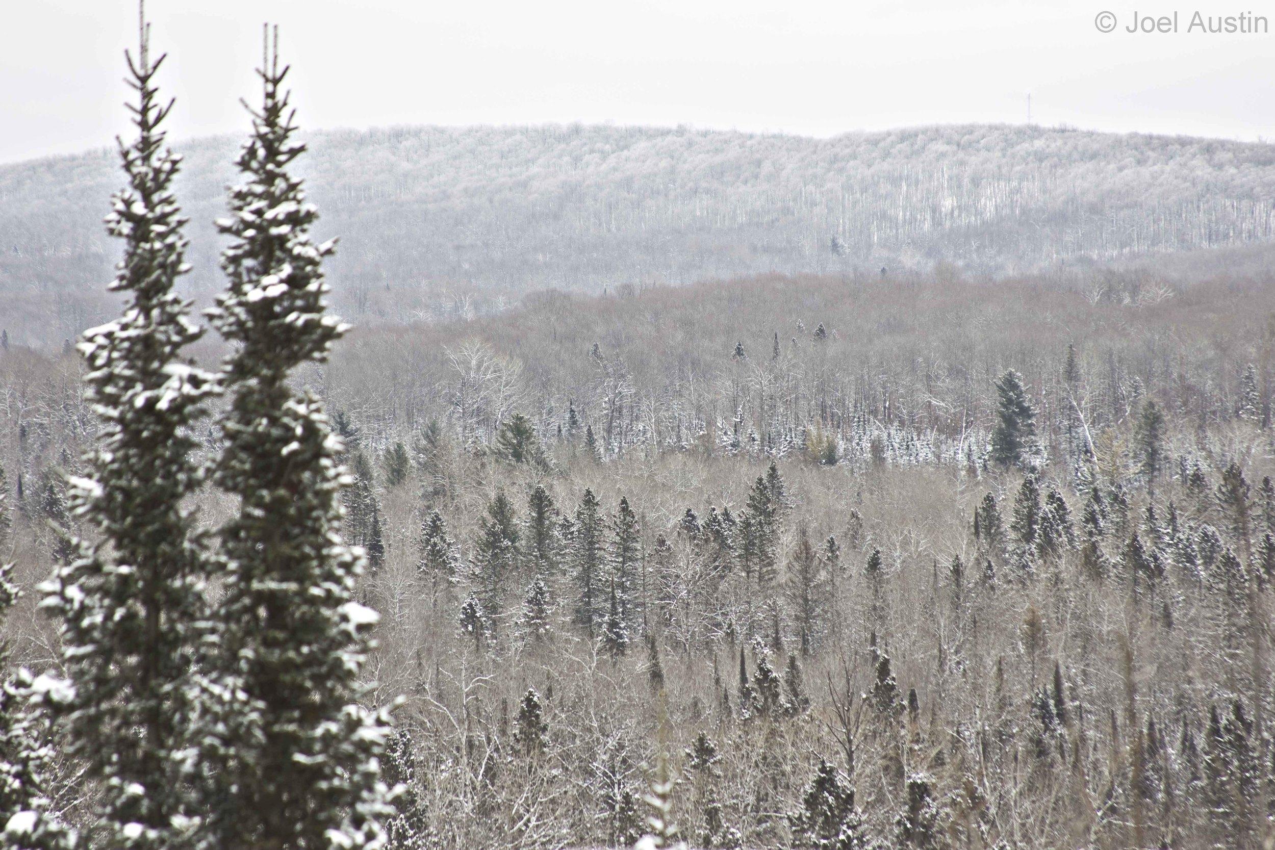 Wintery scene from Penokee Overlook