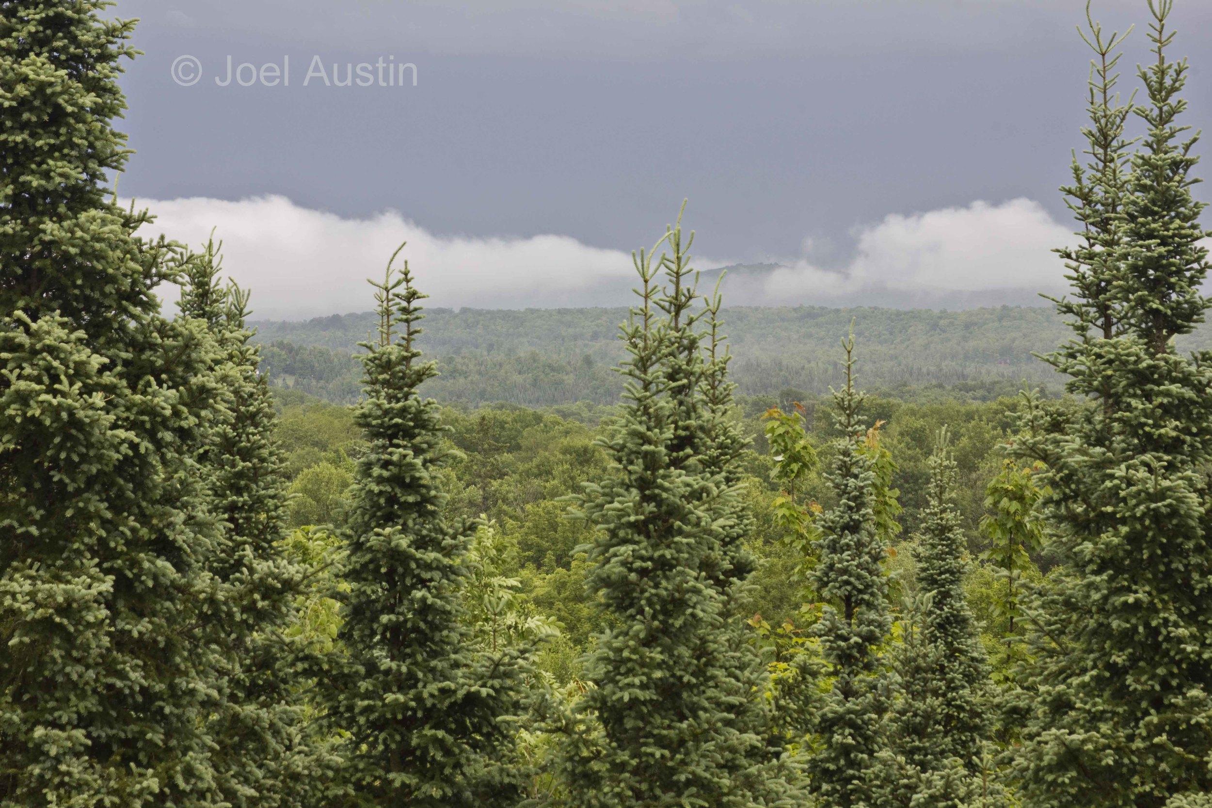 Misty summer day at the Penokee Overlook