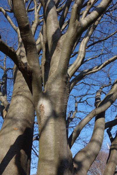 a mulit-hipped tree