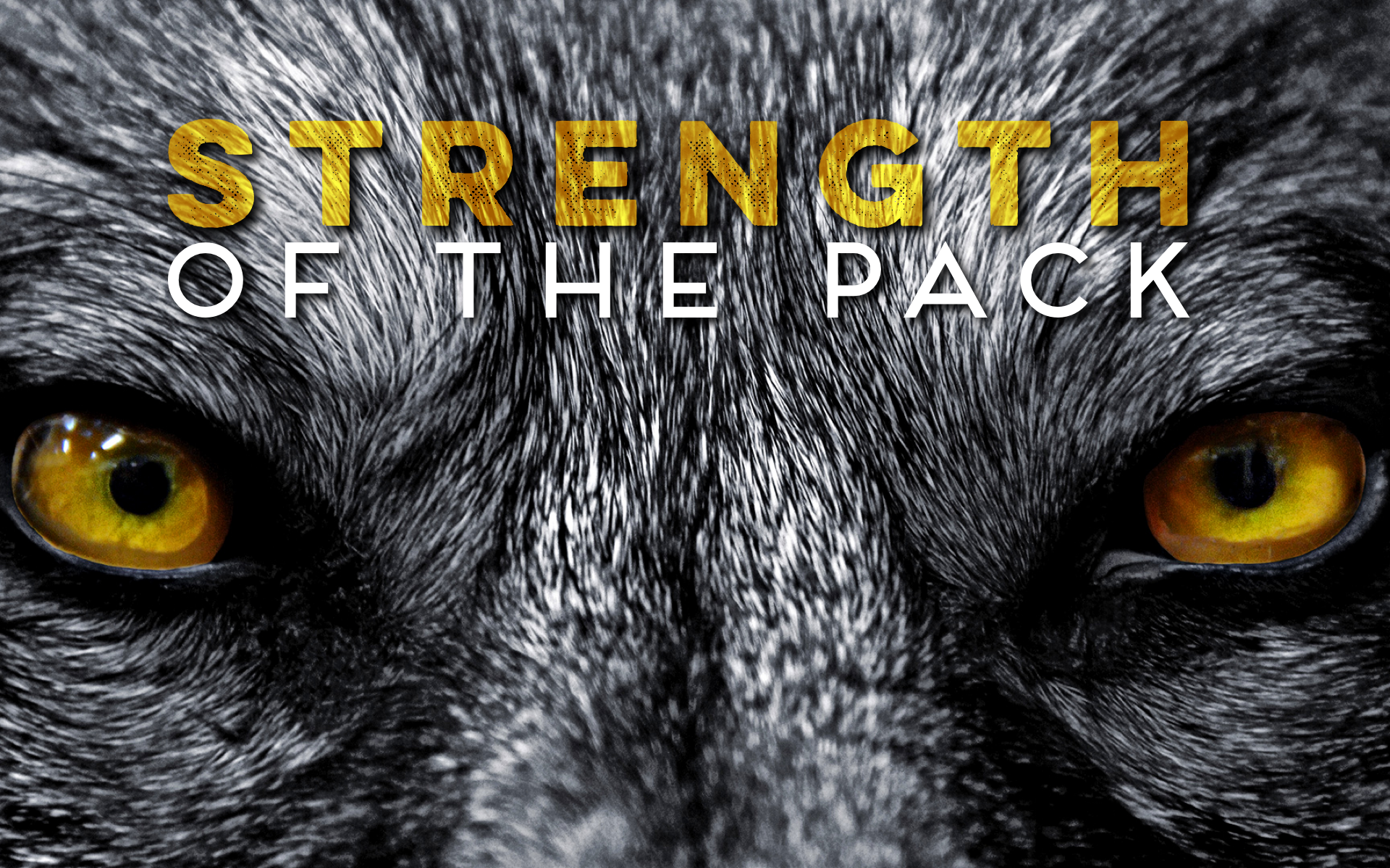 Strength of the Pack  (Grade 4)