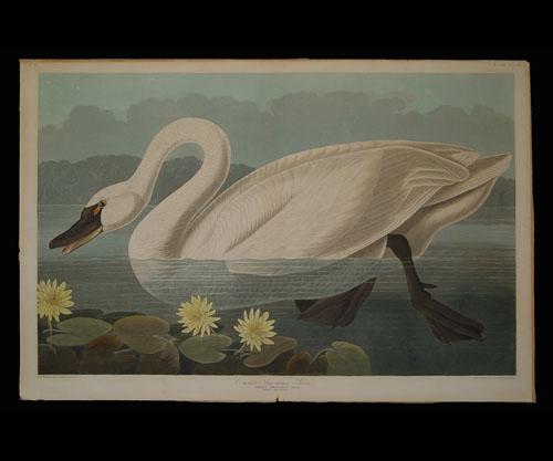 Audubon Icon.jpg