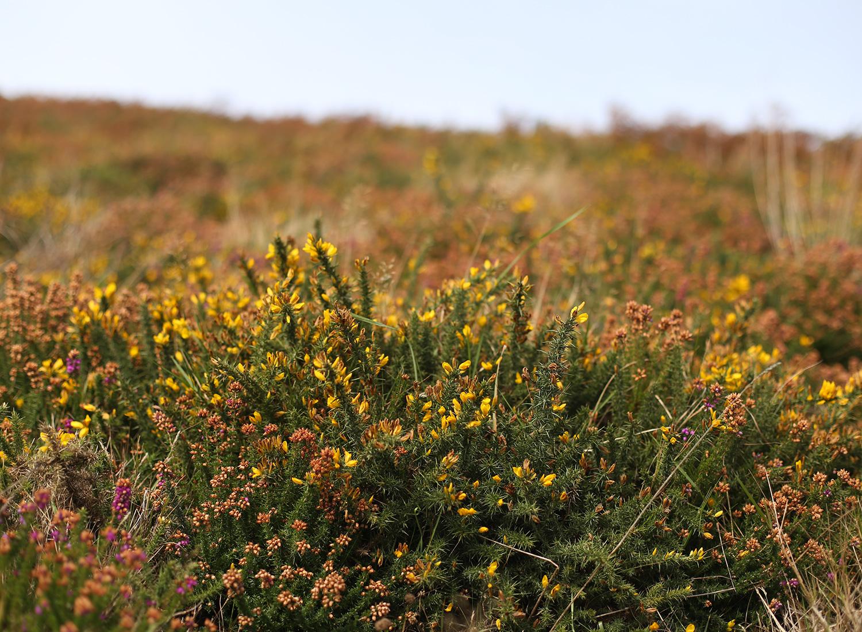 ireland-howth-flowers-countryside.jpg