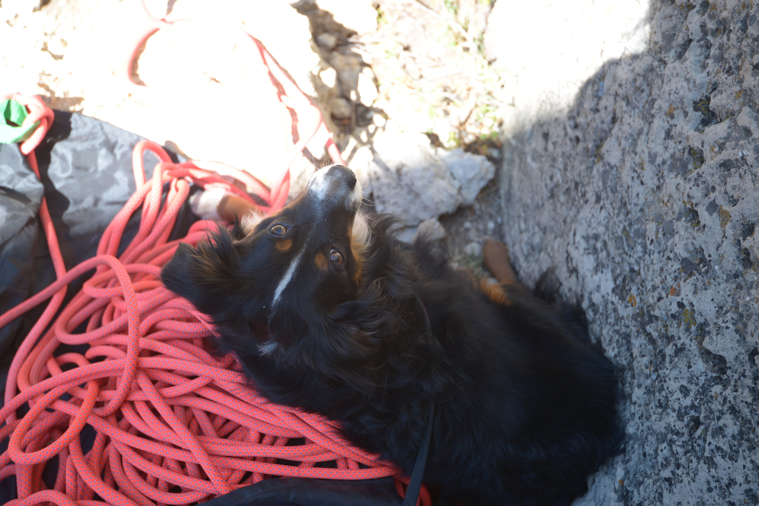 Our crag dog Riley. You'll see him in my previous article (The Finds, Idaho.)