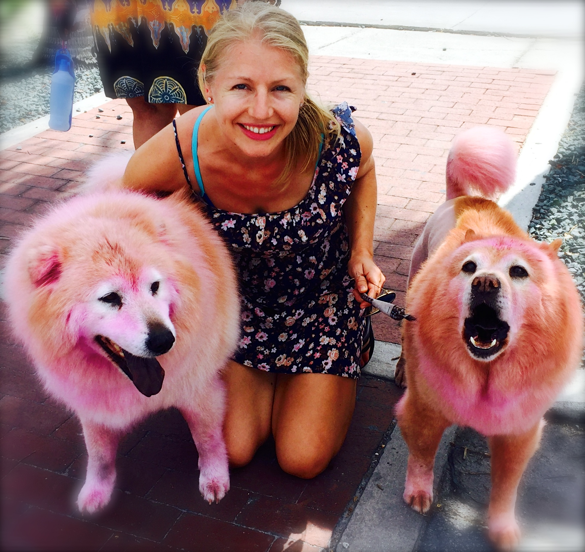 """""""Po"""" and """"Dro"""", 15 year old furry sisters, rocking their pink do's in honor of breast cancer awareness month!"""