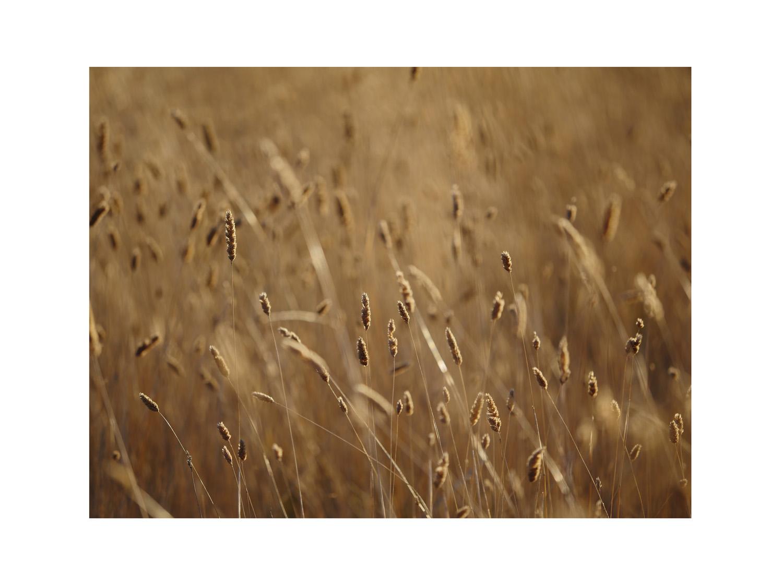 GRASS P1120289 (7.2017) 12x16MR.jpg