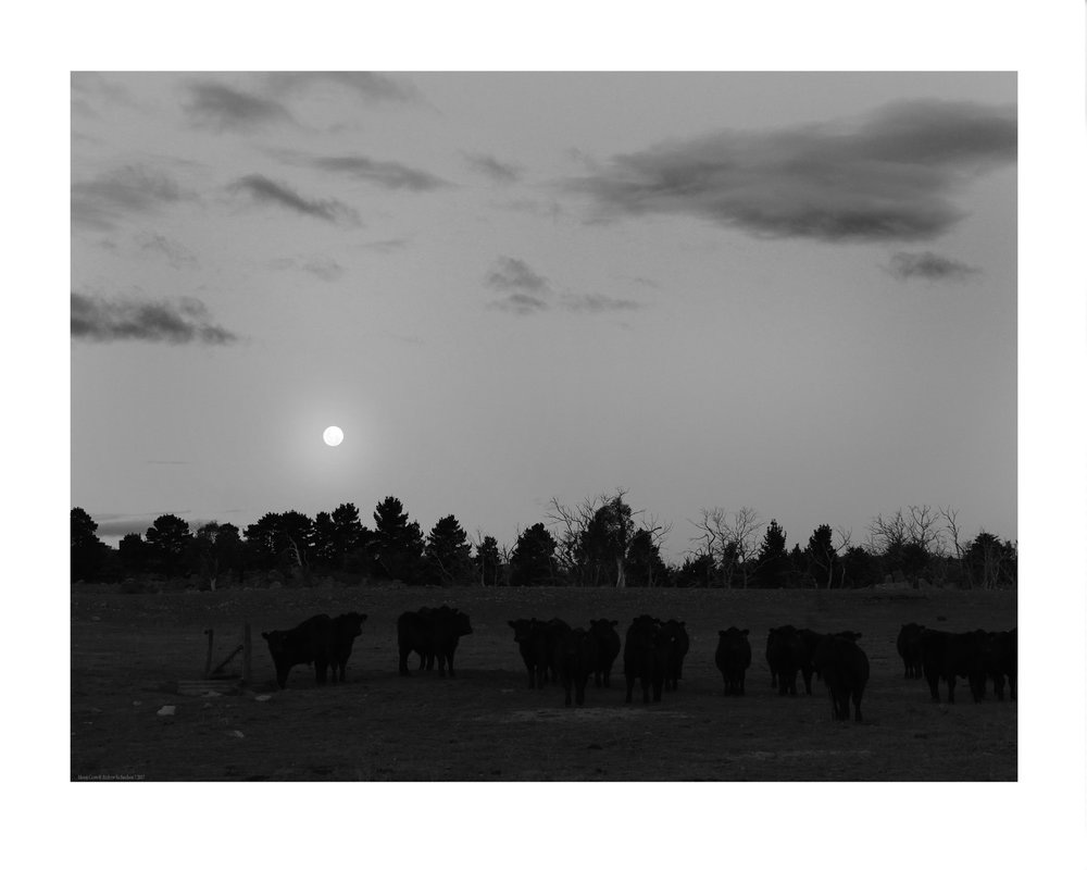 Moon+Cows+7.17+P1120512MR.jpg
