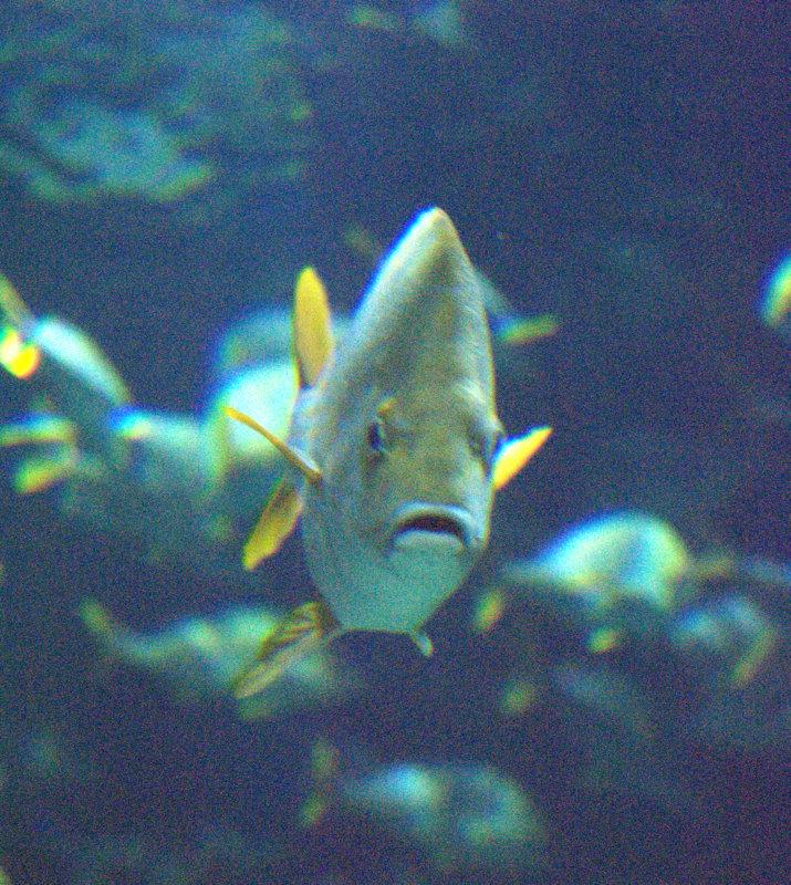Un pez nos mira