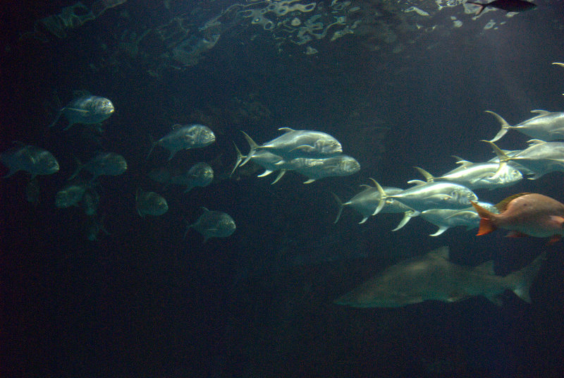 Más peces...