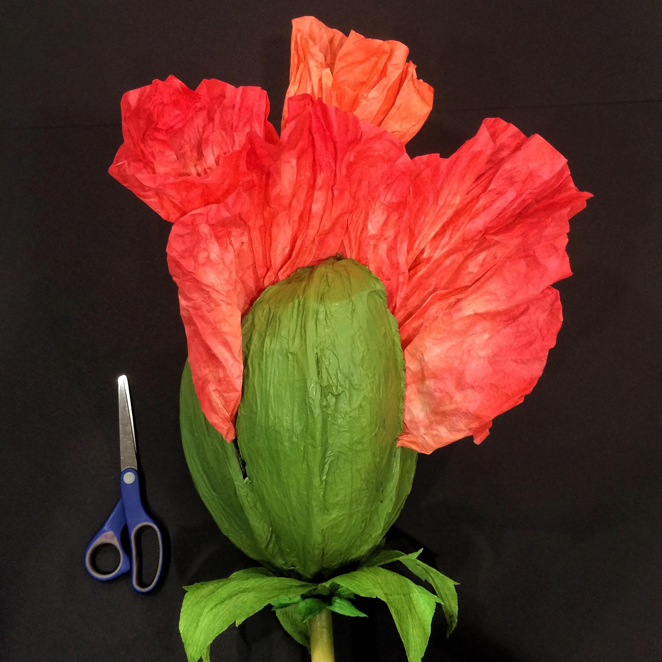 poppy bud.jpg
