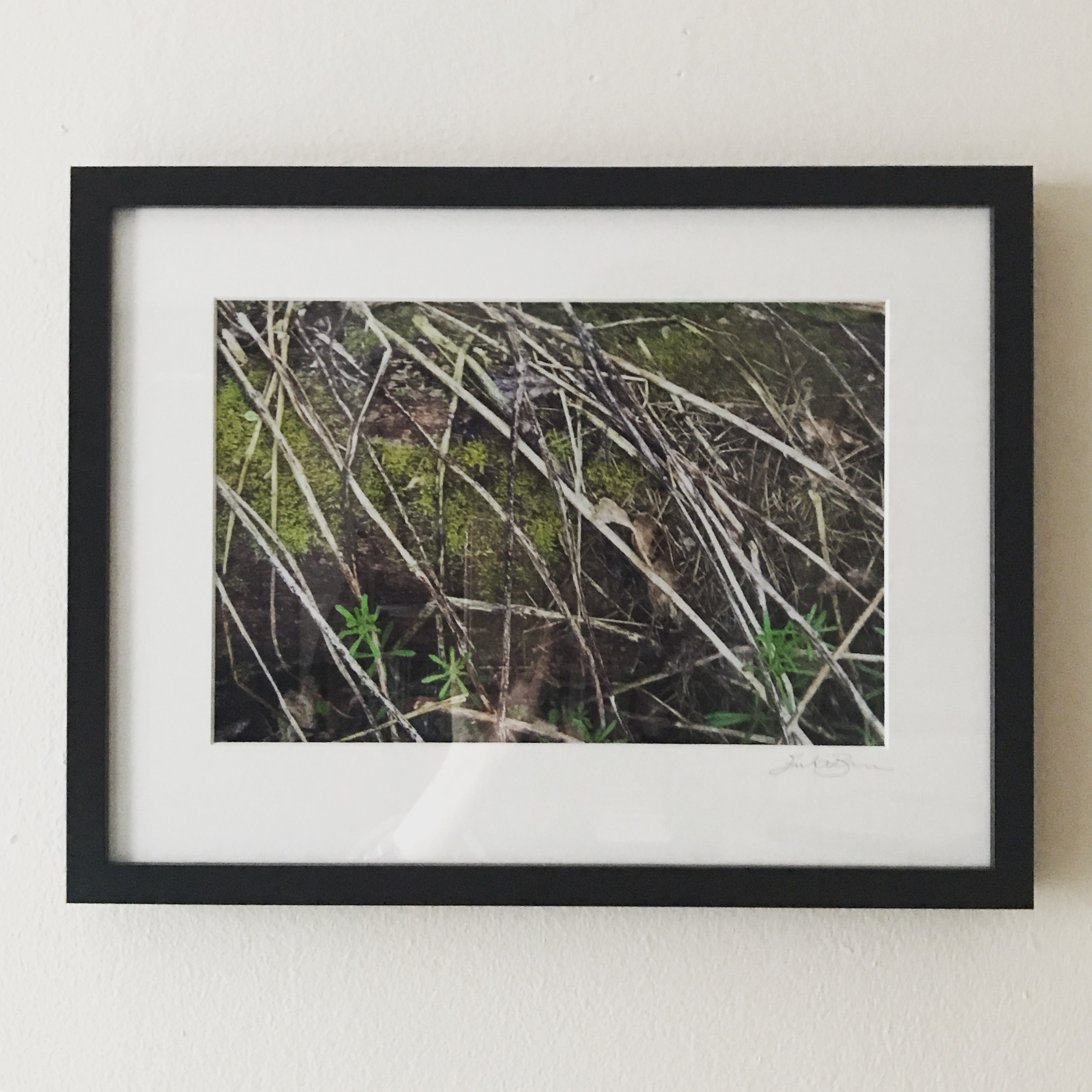 Moss   Inkjet print from slide film negative  CLEARANCE!! $60