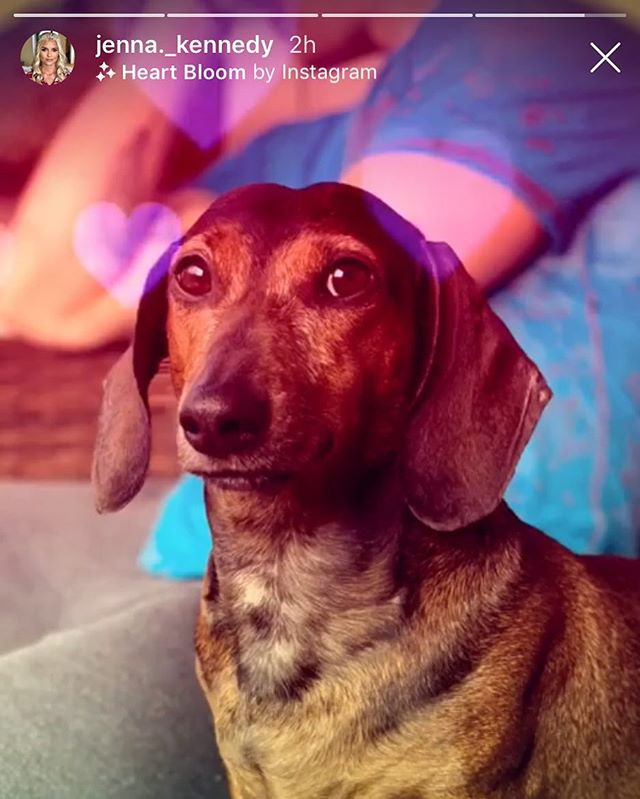 I'd like to thank @jenna._kennedy for making me her valentine and sharing it with the world via Instagram story. There I am in the background. You can faintly see some are tattoos. You're the best. Anyway here's my valentine Taco. #taco #love #happyvalentinesday #dauchshund #weinerdog #charleston