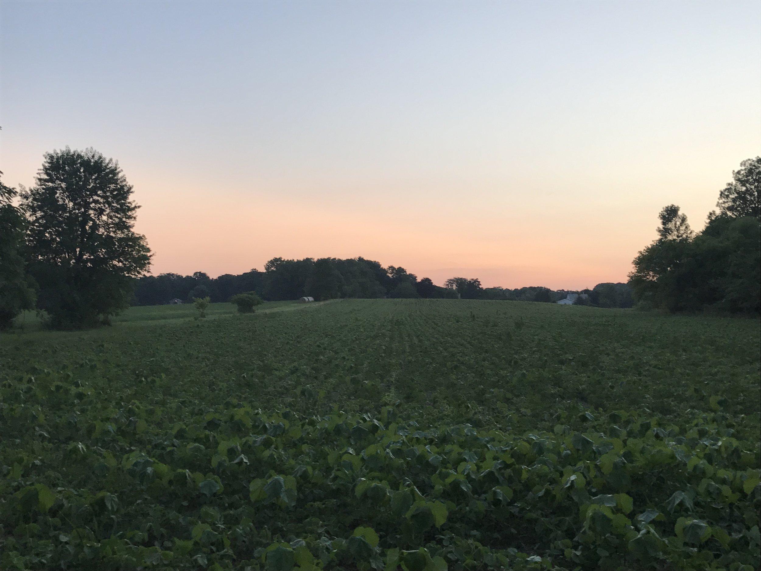 dennis farm