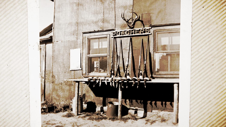 The Poachers' Shack 1952