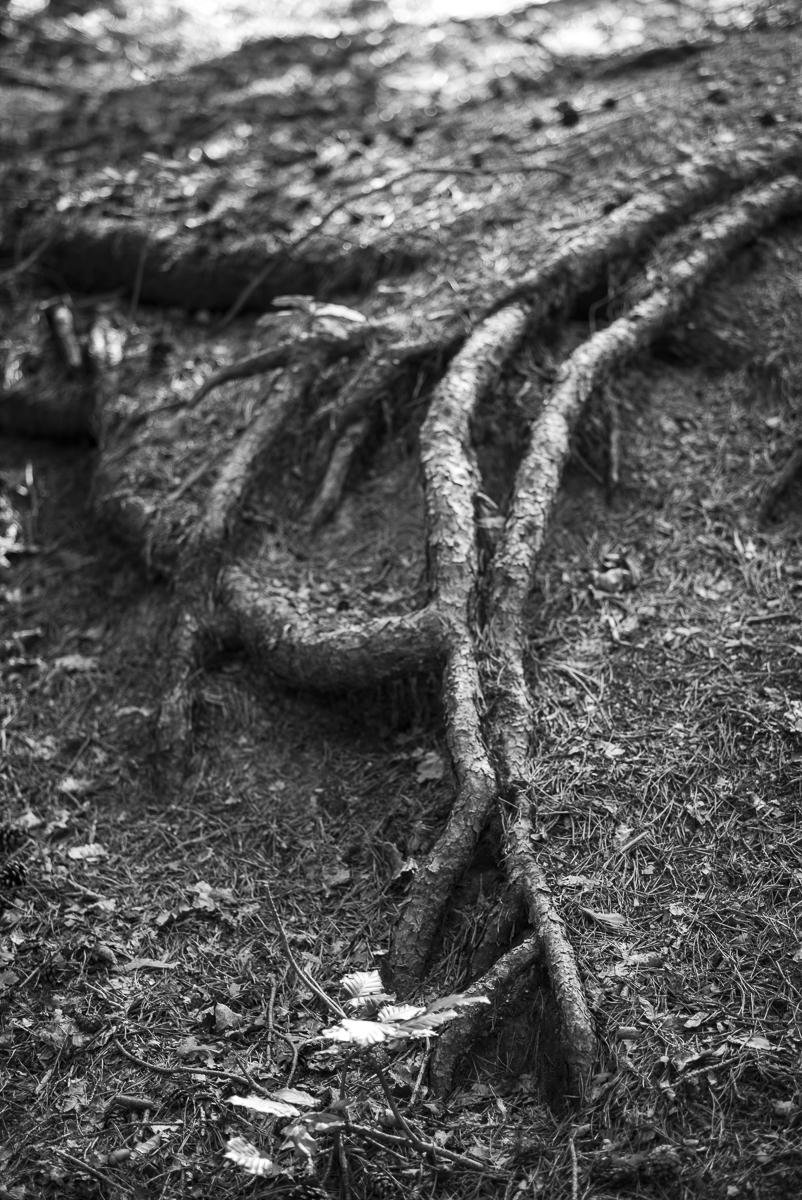 Ferry Knijn Fotografie 2015