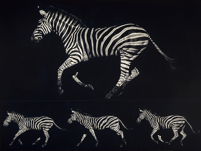 Homage to Muybridge