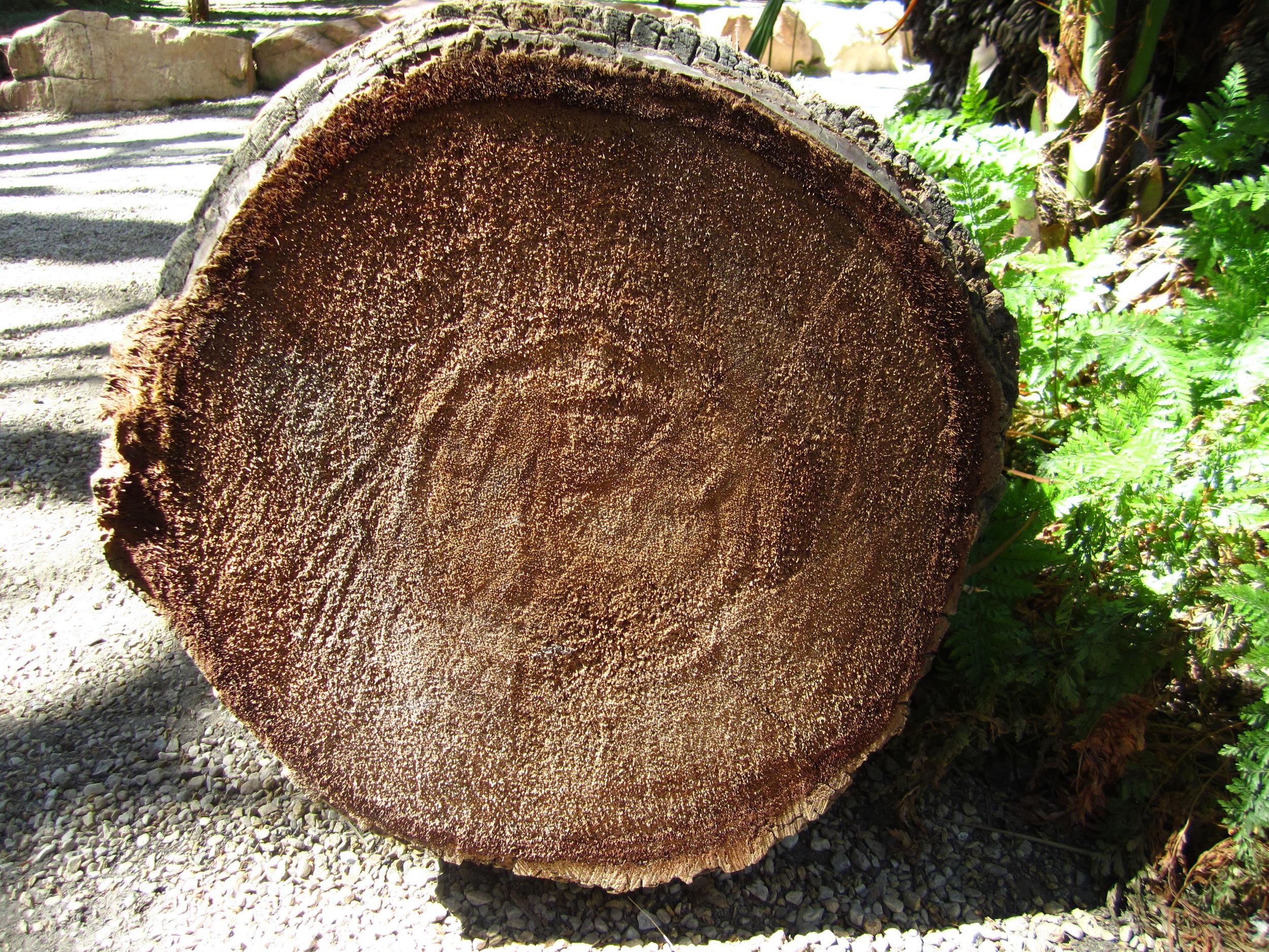 Palm_tree_trunk.jpg