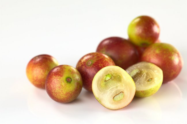 Fruits of the Camu-camu ( Myrciaria dubia ) also benefit from dispersal by fish.