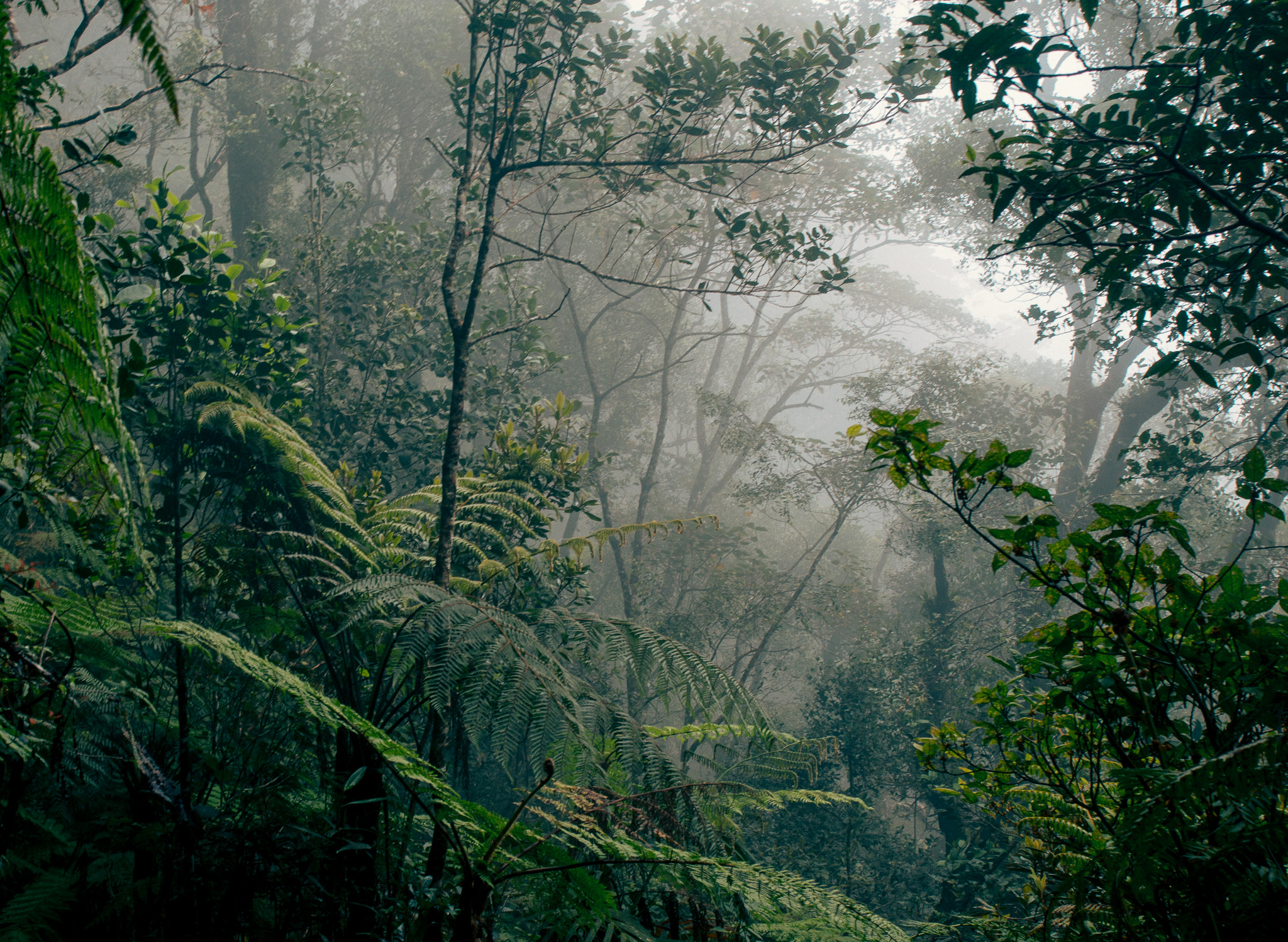 Borneo_rainforest.jpg