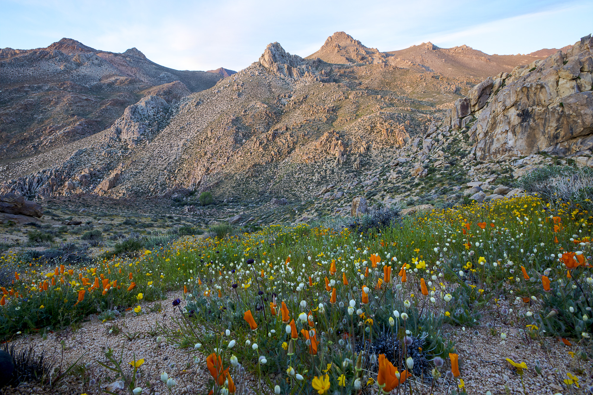 Owens_Peak_Wilderness_wildflowers_2017.jpg