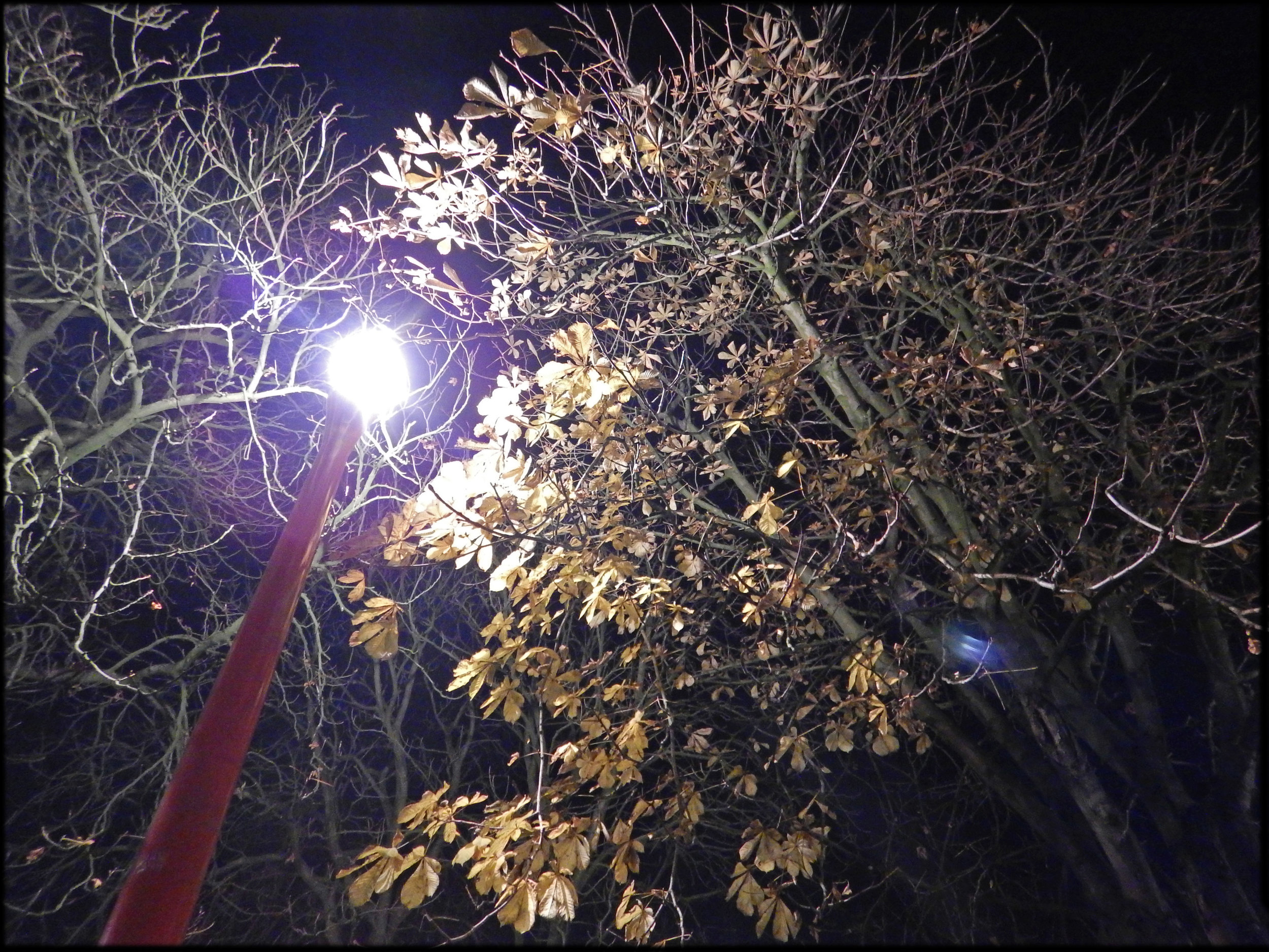 Effet_de_la_pollution_lumineuse_sur_l'arbre_urbain_Effect_of_light_pollution_on_urban_trees_and_dead_leaves_04.jpg