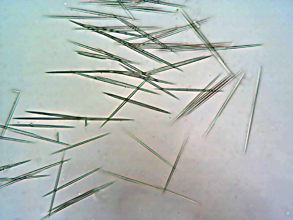 Needle-like raphides extracted from the leaves of an  Epipremnum  species.