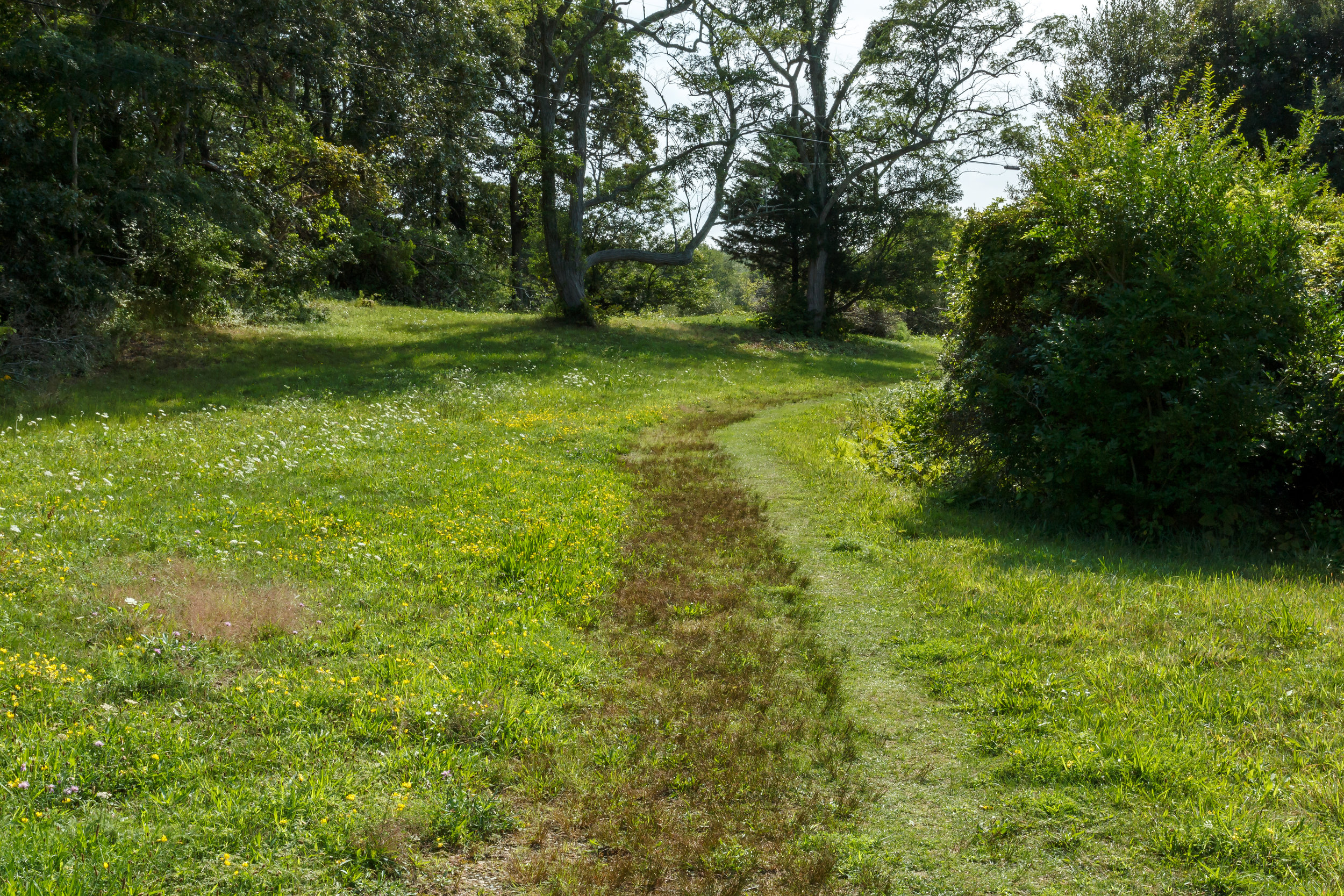 The darker vegetation running along the path is all path rush!