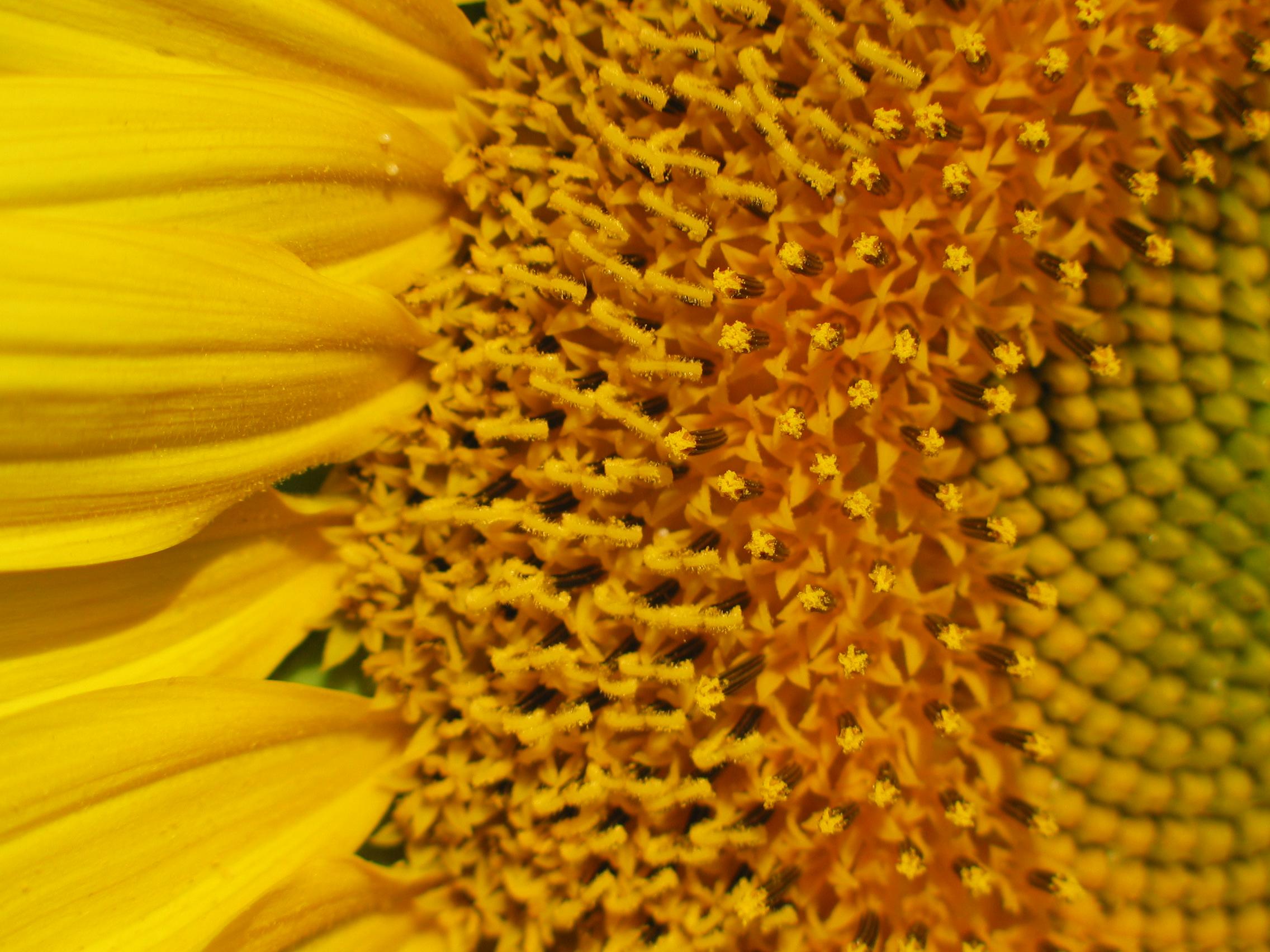 Flower_head.jpg