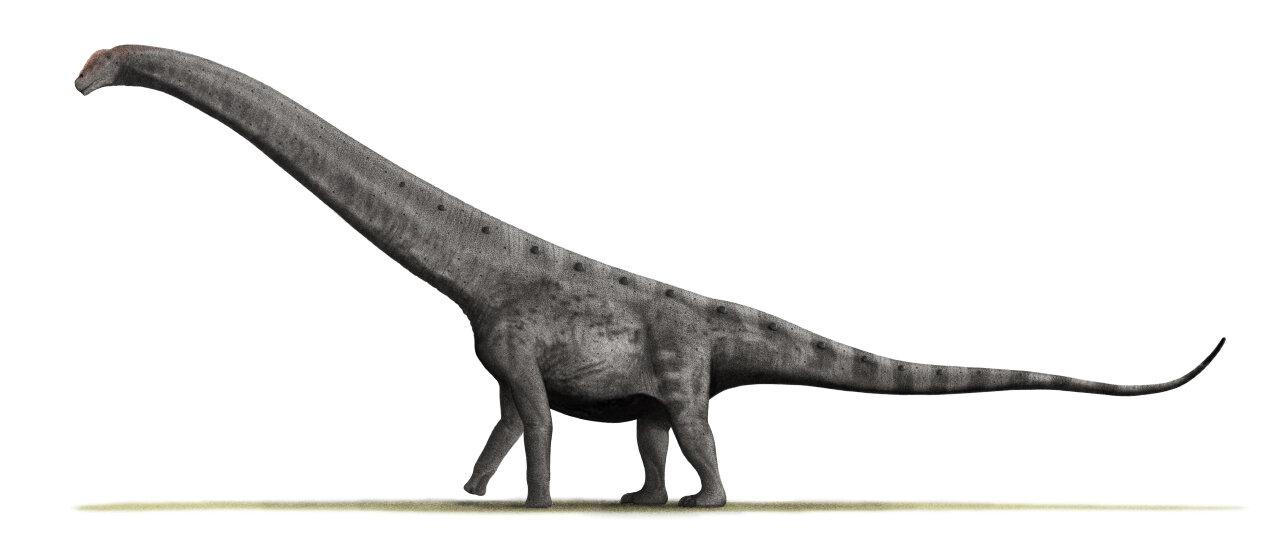 Argentinosaurus_BW.jpg