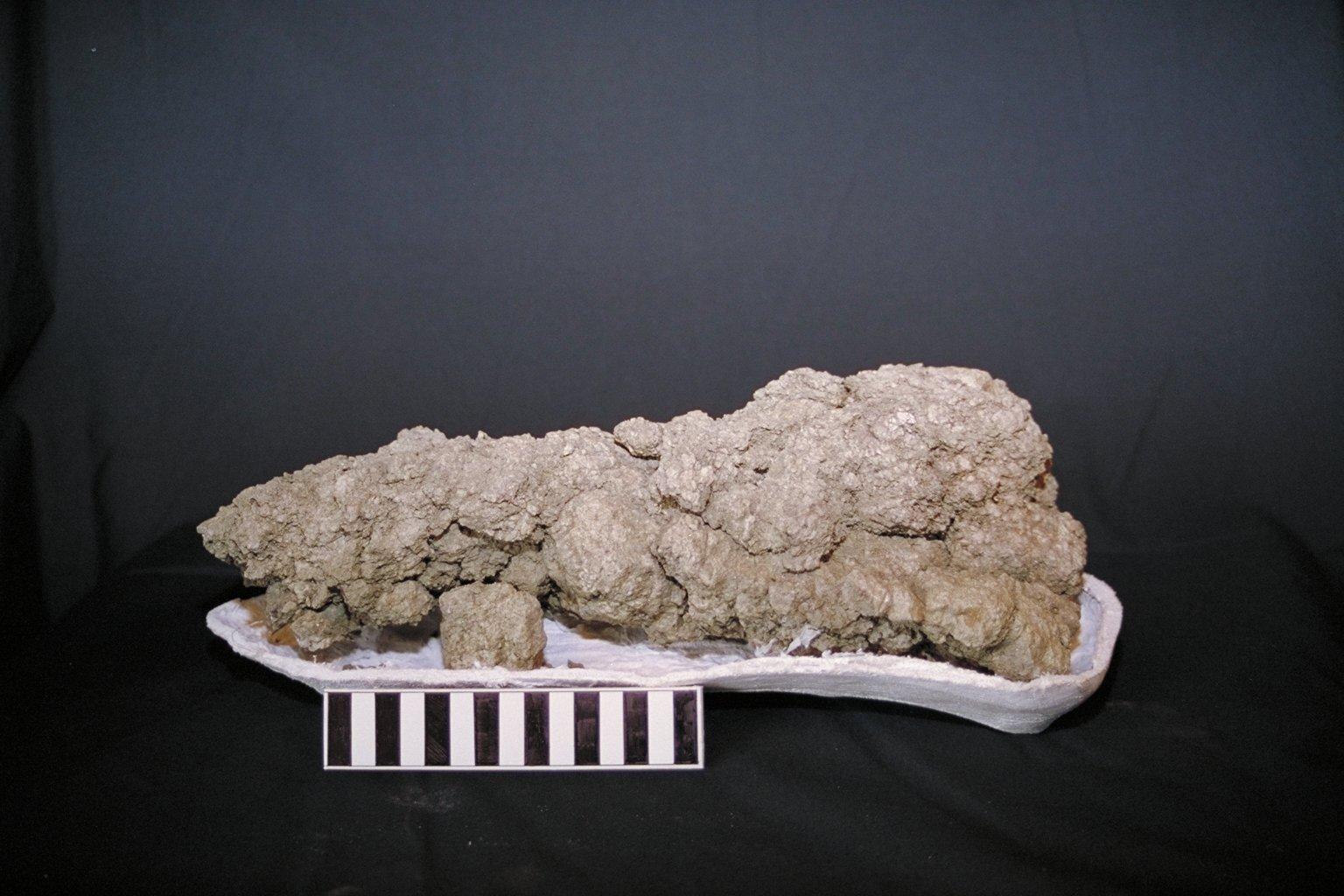 "Fossilized dinosaur poop or ""coprolite."""