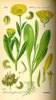 Calendula petals:   anti-inflammatory, anti-fungal, antibacterial, and very, very pretty.    ewg = 1