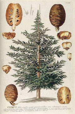 Cedarwood:   great for ezcema, cedarwood is anti-inflammatory, anticeptic, and astringent    ewg = 1