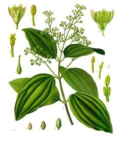 Cinnamon:   antifungal and antibacterial, cinnamon is wonderful for stimulating blood flow and nourishing the skin    ewg = 1