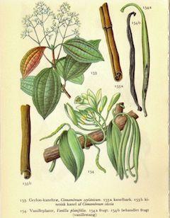 Cinnamon bark:   antiseptic and antifungal    ewg = 1