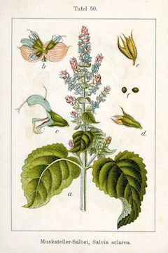 Clary sage:   a natural antidepressant, clary sage is uplifting and calming, while also providing antibacterial benefits    ewg = 1