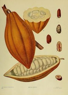 Cocoa butter:   hydrating, moisturizing, and soothing, cocoa butter aids in fading stretch marks and is used as a base for skin care products.    ewg = 1