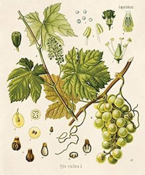 Grapeseed:   possessing the benefits of grapeseed oil    ewg = 1