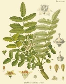 Frankincense:   immune-boosting, calming, pain-reducing, and antibacterial    ewg = 1