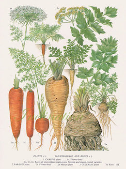 Carrot seed:   contains anti-cancerous and antibacterial properties, carrot seed oil is also a natural sunscreen. It is also a powerful antioxidant, fighting free radicals. Carrot seed oil and powder are great for mature or ageing skin.    ewg = 1