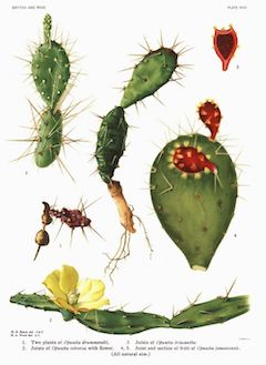 Prickly pear seed oil :  A powerful antioxidant, prickly pear seed oil can be found in our Spring Goddess eye creme. It is deeply hydrating, yet balancing, and it helps increase the rate of cell turnover, diminishing the look of fine lines and wrinkles.    ewg = 1