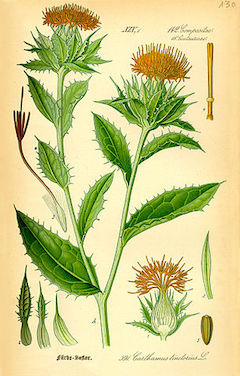 Safflower oils :  An excellent carrier oil, safflower oil is soothing, moisturizing, and anti-ageing.    ewg = 1