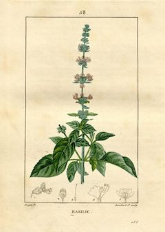 Sweet basil :  Sweet basil clears the mind, soothes the skin, and calms anxiety.    ewg = 1