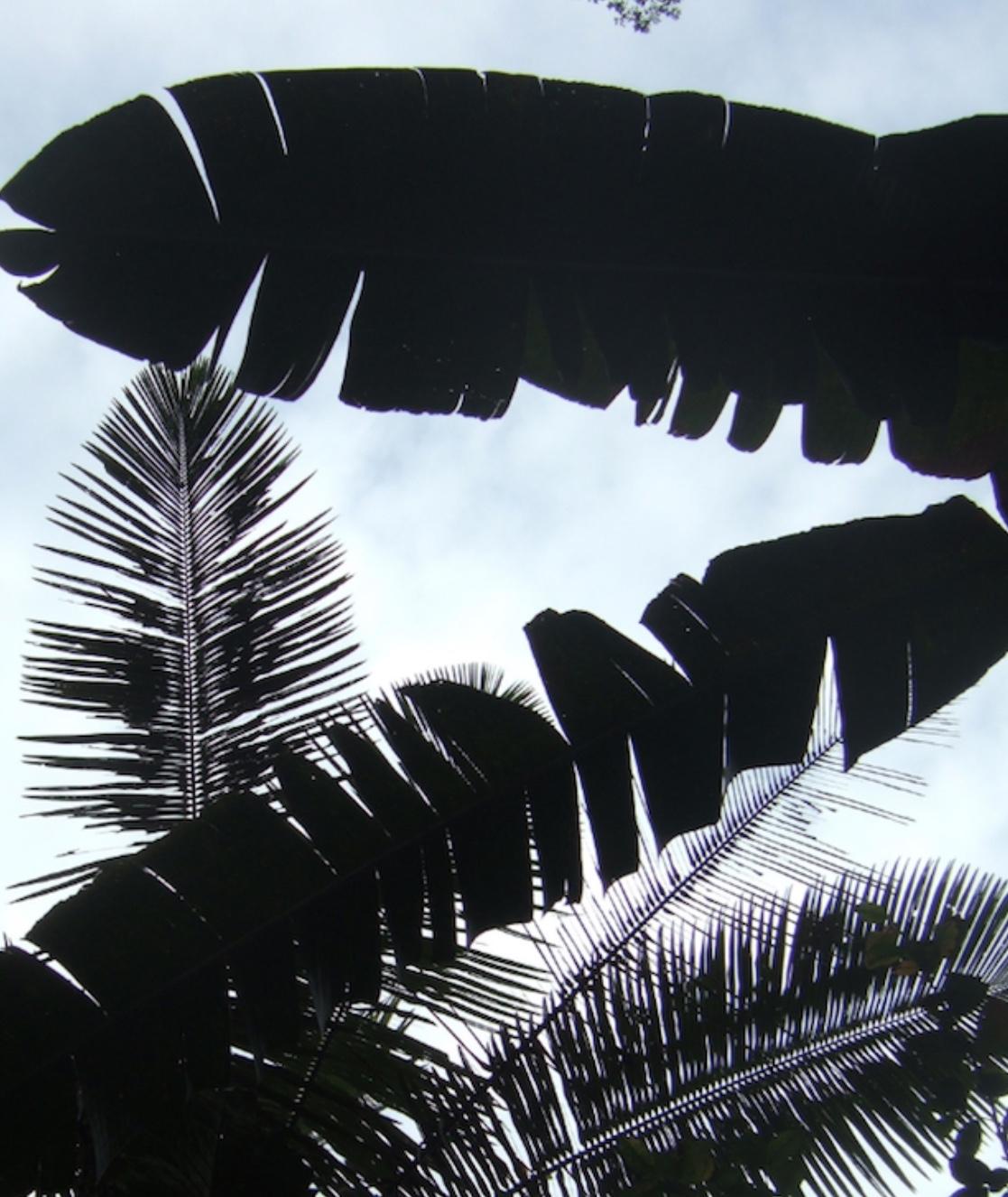 Amazonian Flora and Fauna