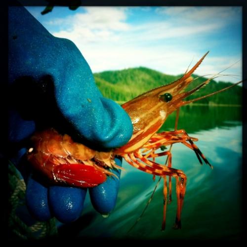 shrimp-hand-small.jpg