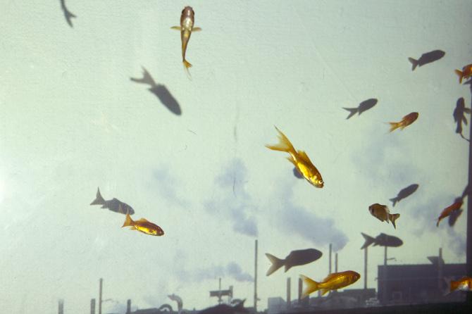 "a still from Ellie's project ""Northfield USA: a goldfish portrait"" 2015"
