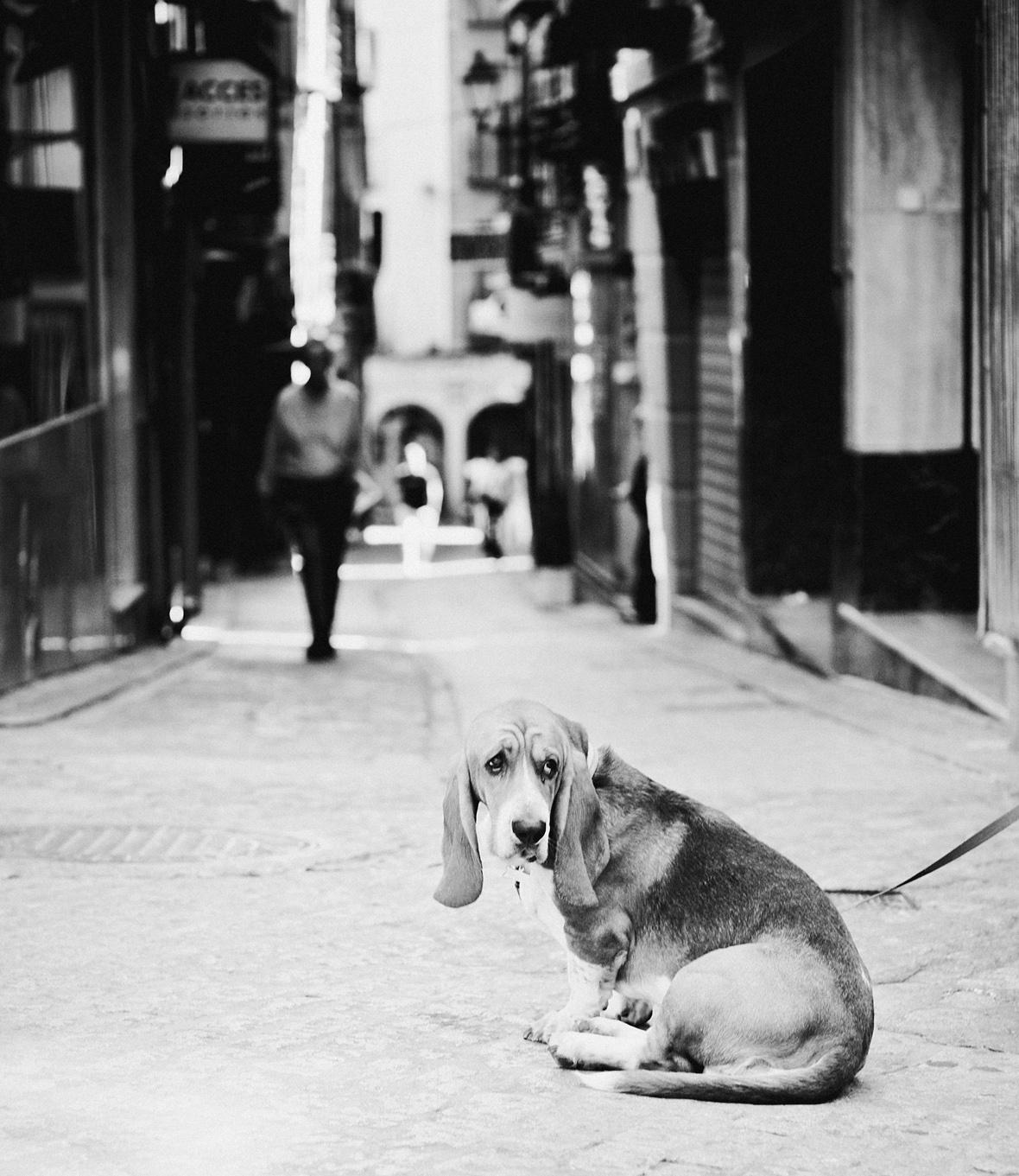 Dog photographer france
