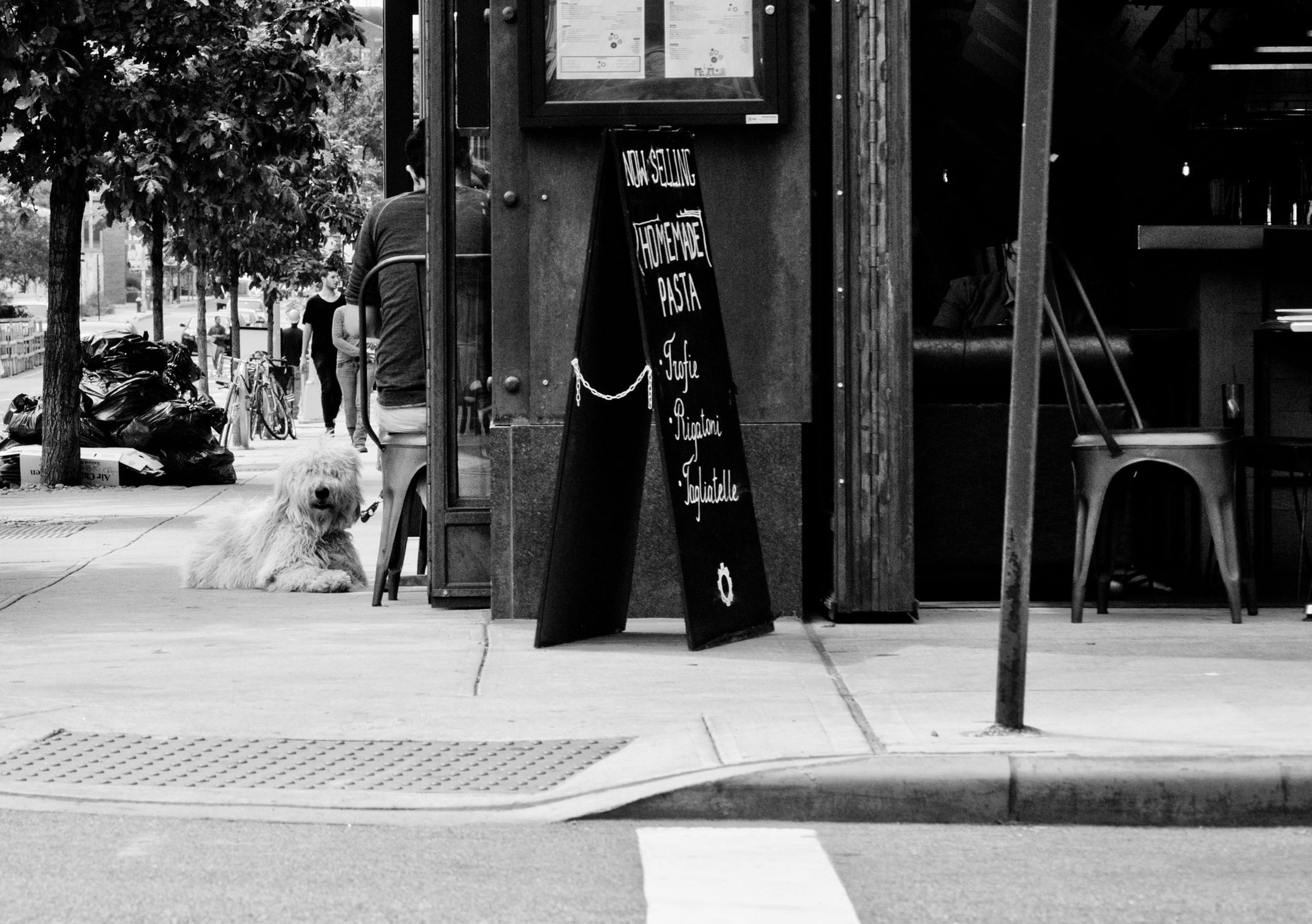 Dog Photographer Brooklyn